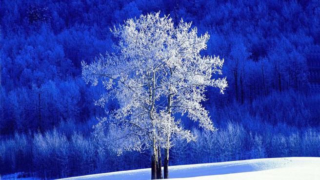 Source: freehdw.com/wallpaper/ beautiful-tree-in-winter-53903.html